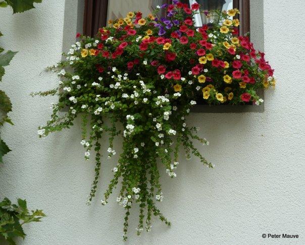 bloemen rijn